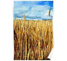 St.Margarets - Barley Fields Poster