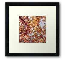 Autumn Up Framed Print