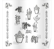 ::Potted Plants- White BG:: Poster