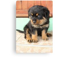 I Don't Need To Be Told I Am Cute ..... Canvas Print