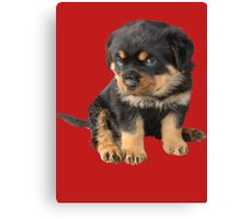 I Don't Need To Be Told I Am Cute Canvas Print