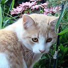 Vistor In My Garden by PatChristensen