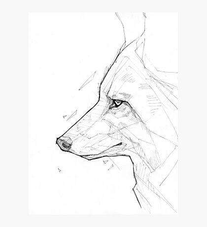 Coyote - Ink Photographic Print