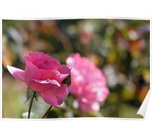 Roses I Poster