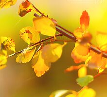 calm warmth by JoeSPhotography