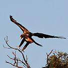 Landing by Mark Cooper
