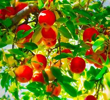 Red Apple Tree by IMAGETAKERS