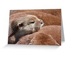 The Otter Huddle .... Greeting Card