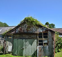 Old Shed at  Mangerton Mill by lynn carter
