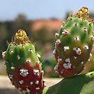 Prickly Portrait! by heatherfriedman