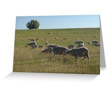 AND WHO ARE YOU?  SHEEP NEAR BIG TIMBER, MT Greeting Card
