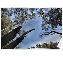 Treetop Poster