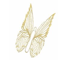 Gold Butterfly for colouring Photographic Print