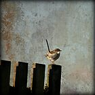 little wren by gmws