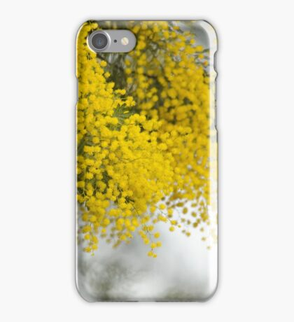 Yellow wattle in bloom iPhone Case/Skin