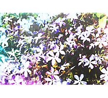 Abstract Watercolor Flowers Photographic Print