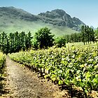 Vineyards by Carole-Anne