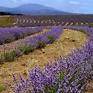 Tasmania, Farming Landscape by photoj