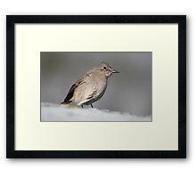 Cape Town Bird Framed Print