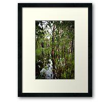 Paperbark Swamp Framed Print