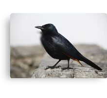 Another Cape Town Bird Canvas Print