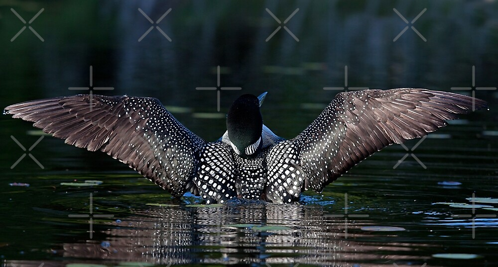 I once caught a fish....Common Loon by Jim Cumming