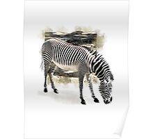 Zebra Extended Poster