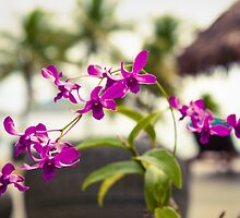 Orchids by Heath Carney
