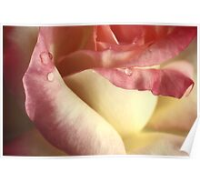 The Beauty Of The Rose.... Poster