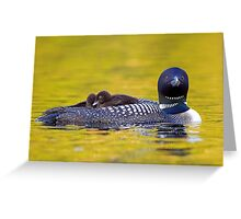 Ready for bed - Common loons Greeting Card