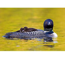 Ready for bed - Common loons Photographic Print