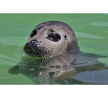 Seal Pup ! Photographic Print
