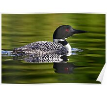 Calming Greens - Common Loon Poster