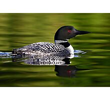 Calming Greens - Common Loon Photographic Print