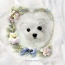 Hermes the Maltese Puppy Calendar by Morag Bates