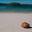 Monu Shell 2 by Heath Carney
