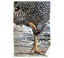 Funky Chicken Dance Poster