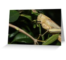Hungry Grass Hopper Greeting Card