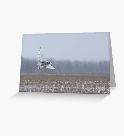 Snowy Owl takes flight Greeting Card