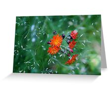 Orange Brush Greeting Card
