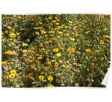 Field of yellow flowers inside the Garden of 5 Senses Poster