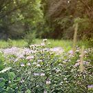 Purple Flower Field by KendraJKantor