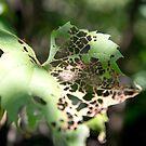 Eaten Leaf by KendraJKantor