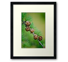 Nature's Abstract 6 Framed Print