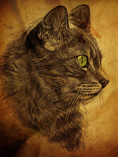 The Great Cat by Pamela Phelps