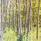 Tall Trees in the Summer by KendraJKantor