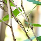 Close up Branch and Vine by KendraJKantor