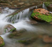 Peaceful Cascade by William C. Gladish