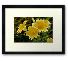 Yellow Trumpet Flower Framed Print