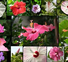 Say Hi to Hibiscus by WalnutHill